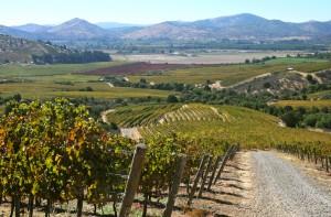 Villa Alegre Vineyard - Maule Valley
