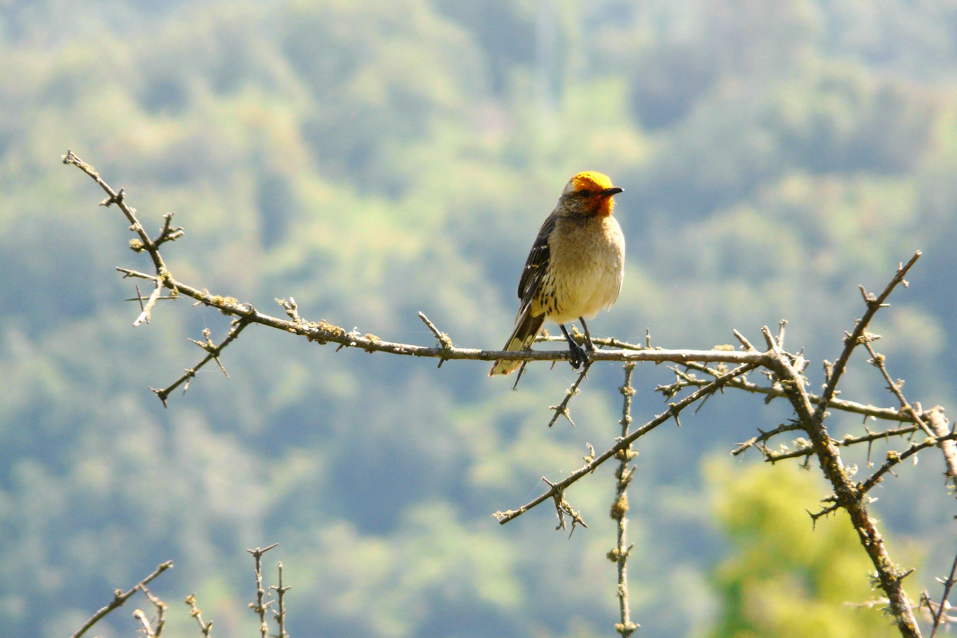 Concha y Toro por la conservación de la biodiversidad