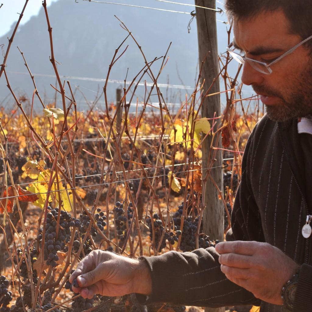 Marcio Ramírez, enólogo jefe del viñedo de Peumo