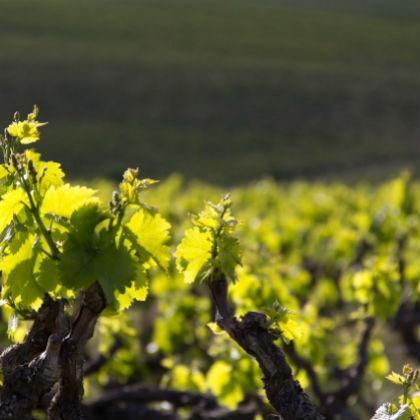 Casillero del Diablo Chardonnay