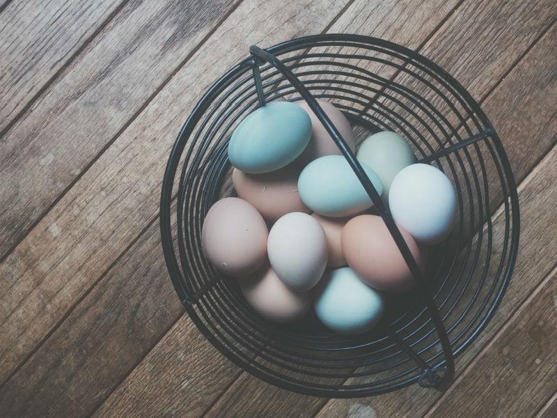 Los legendarios Huevos Azules de la Araucanía