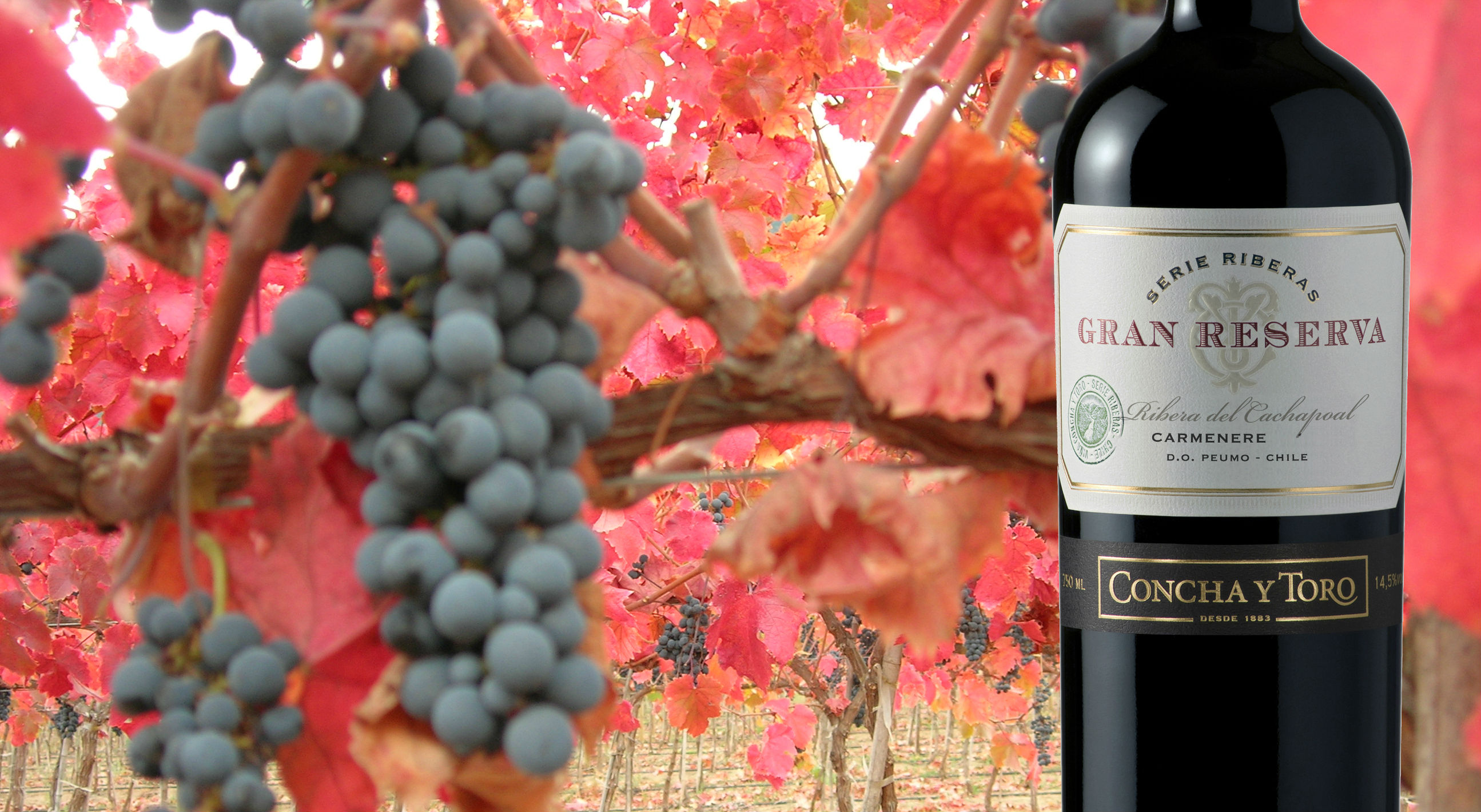 Gran Reserva Serie Riberas debuts among the Wine Spectator Top 100
