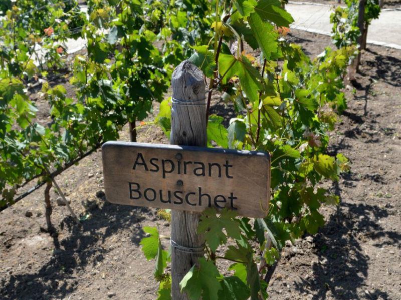 Aspirant Bouchet 4