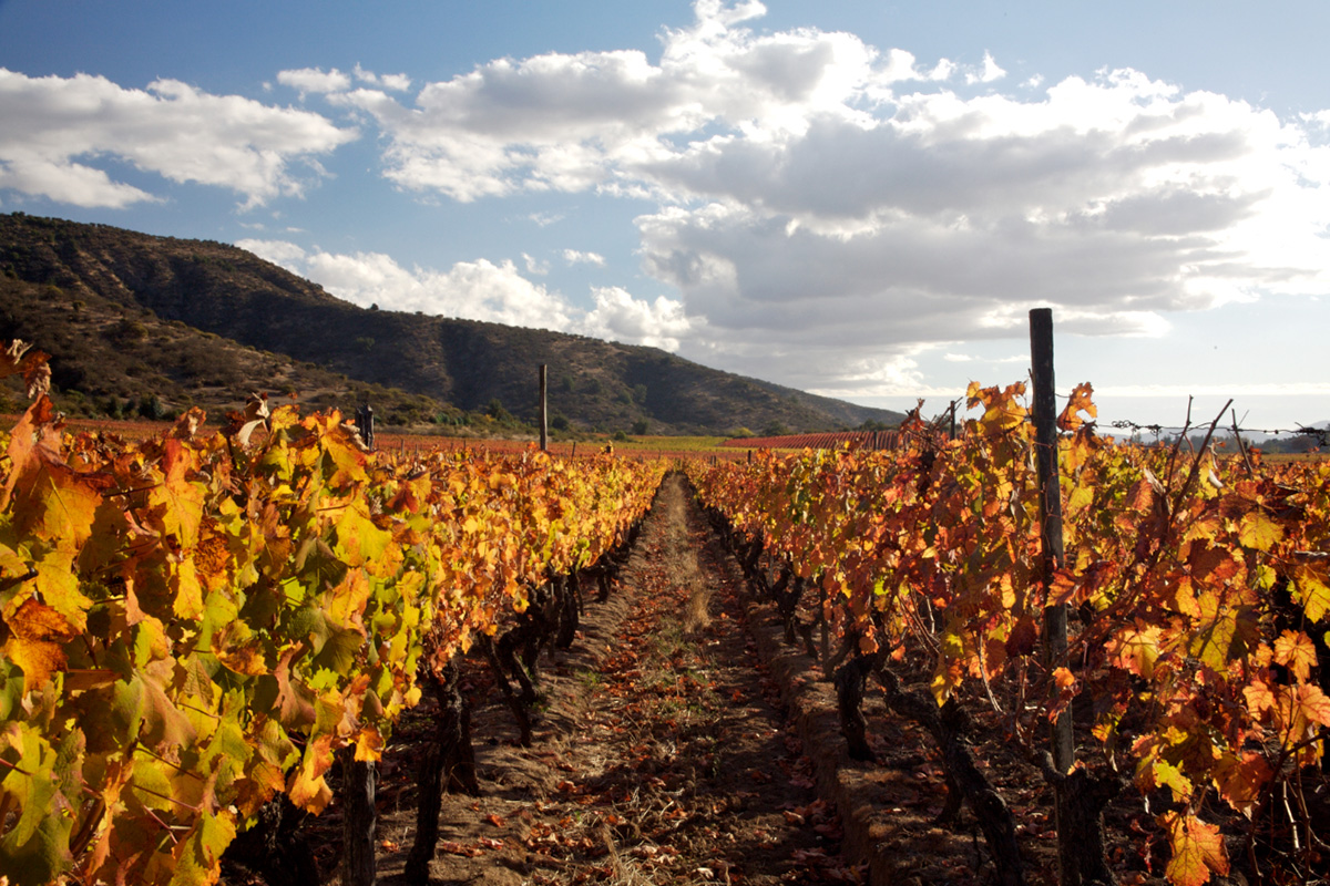 The rediscovery of Carmenere: 25 years on