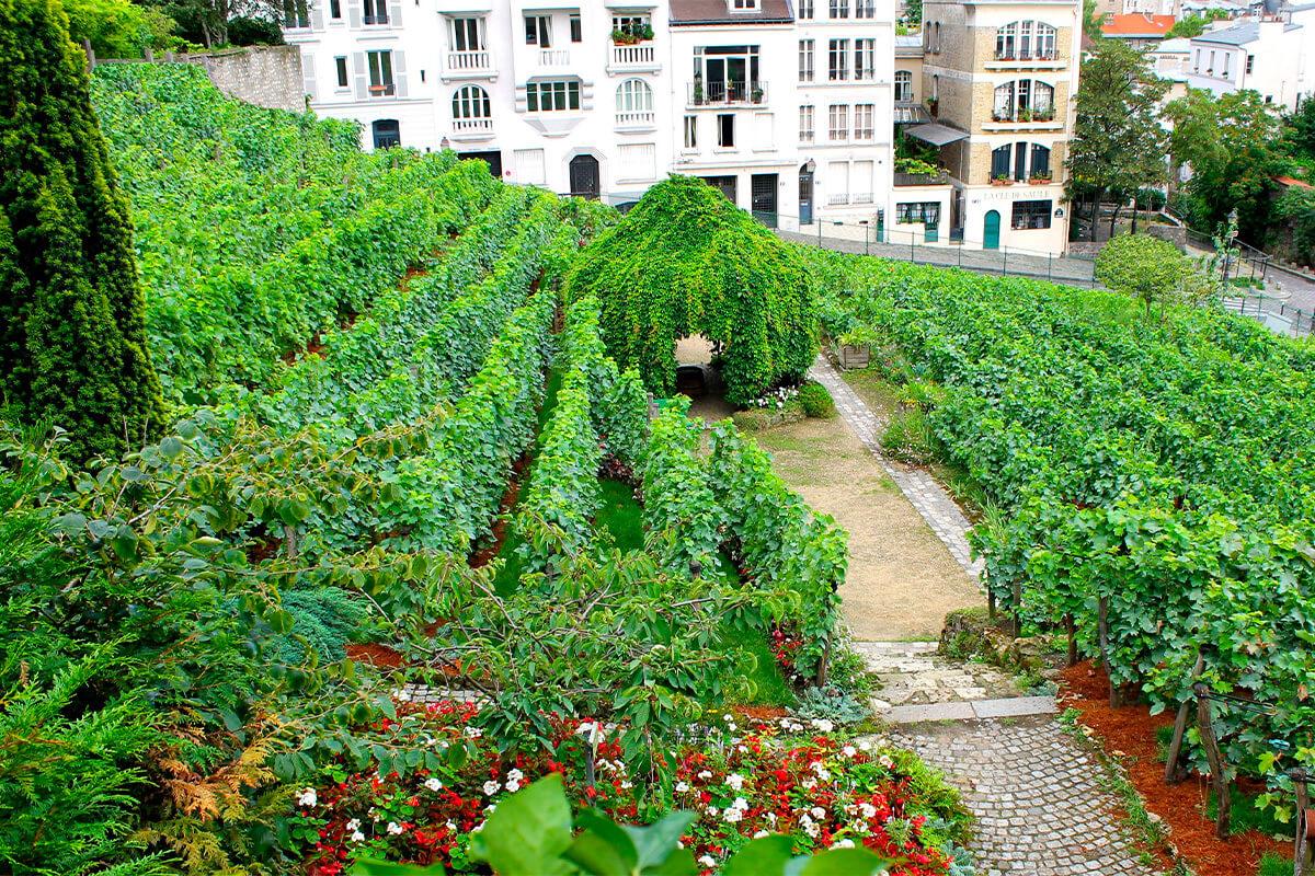vinos-urbanos