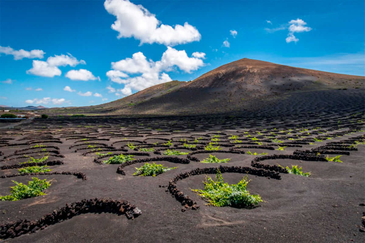 vinos-volcanicos
