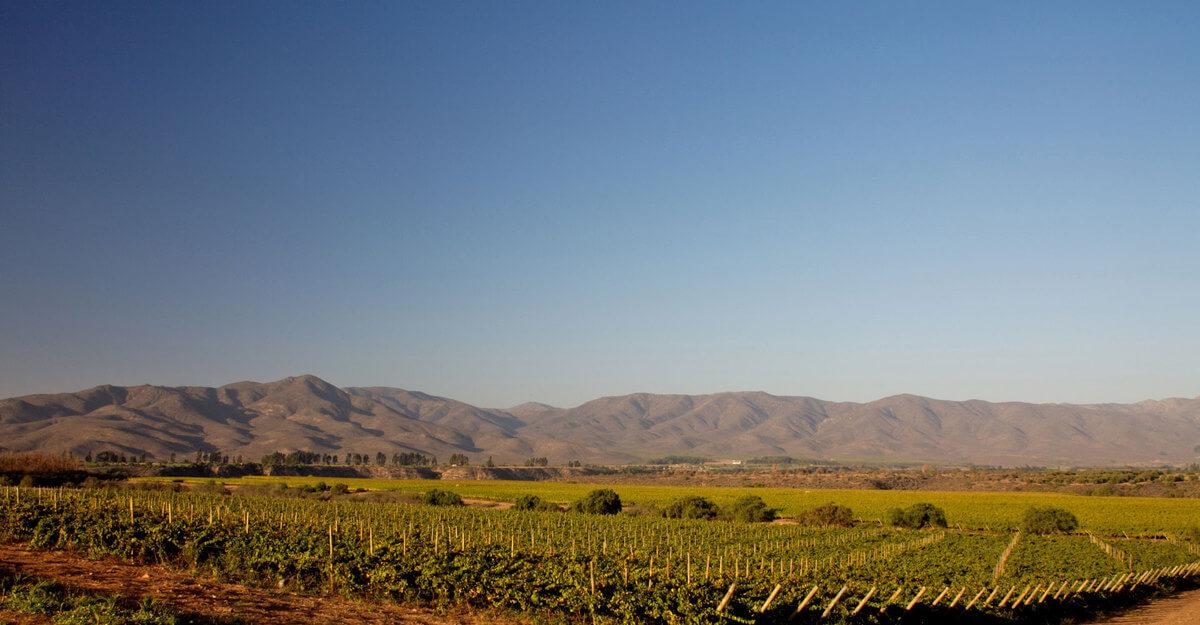 Qué es una denominación de origen de vino